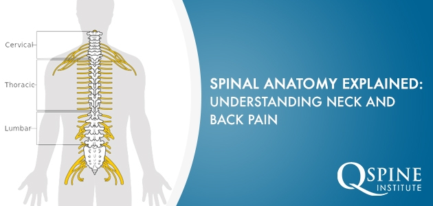 Spinal Anatomy Explained Understanding Neck And Back Pain Q Spine